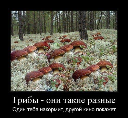 Свежих демотиваторов сборник (13 шт)