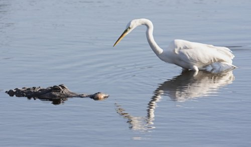Топ-10 Абсолютно странных фактов о птицах