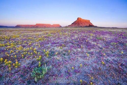Цветочные ландшафты пустыни штата Юта (11 фото)
