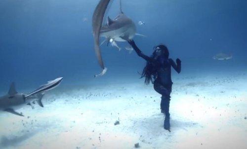 Подводный танец с тигровыми акулами
