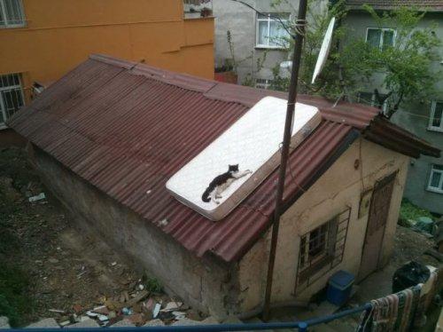 Где-то в России… (27 фото)