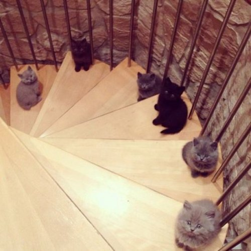 Смешные коты и кошки (22 фото)