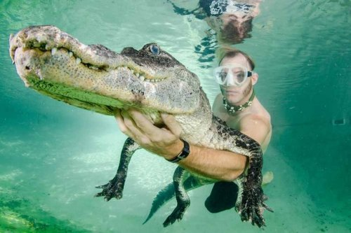 Плавание с аллигаторами (8 фото)