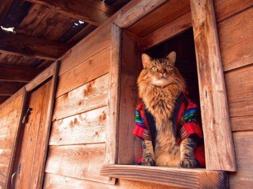 Кот Лоренцо – модель фотографа Джоан Бьонди (13 фото)