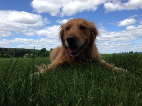 Собаки-жизнь человека украшаки (32 фото)