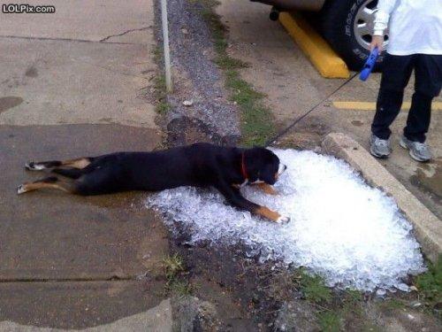 Красноречивые признаки летней жары (22 фото)
