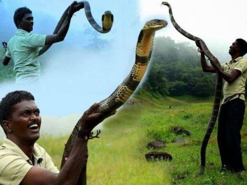 Индиец Вава Суреш, самый смелый на планете специалист по змеям (16 фото)