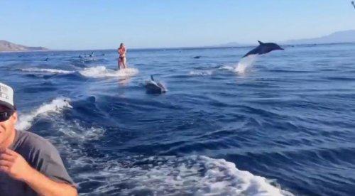 Вейкбординг с дельфинами