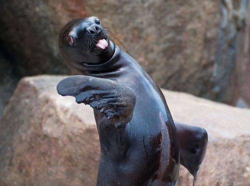 Забавные животные с высунутыми языками (24 фото)