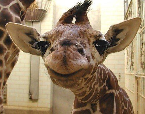 Животные, которые научат вас быть счастливыми (25)