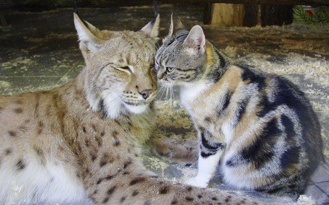 Мир животных в фотографиях (23 фото)