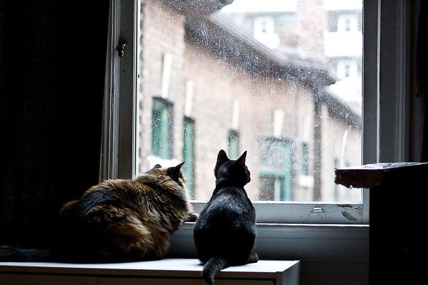 Картинки два котика черный и рыжий под пледом у окна зимой, как