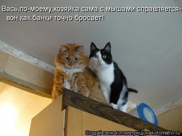 Анекдоты про животных картинки с надписями
