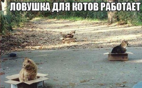 Забавные фото мемы (22 фото)