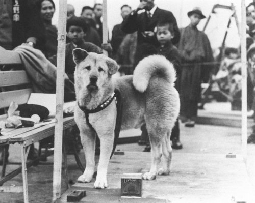 Топ-10 Самых преданных собак в мире