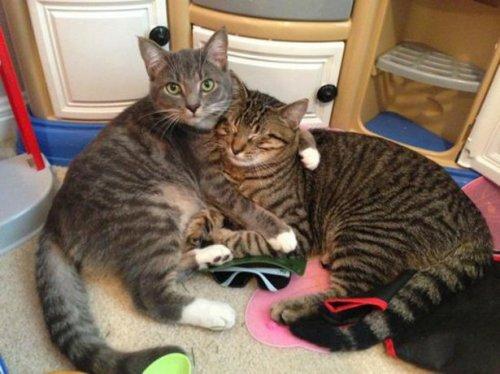 Чудесные котейки (22 фото)