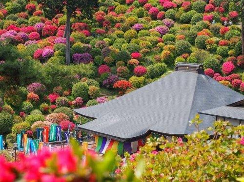 Буддийский храм Шиофуне Канон-дзи в окружении цветущей азалии (12 фото)