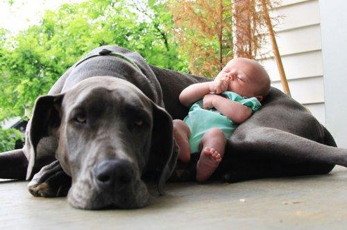 Малыши и их огромные четвероногие друзья (22 фото)