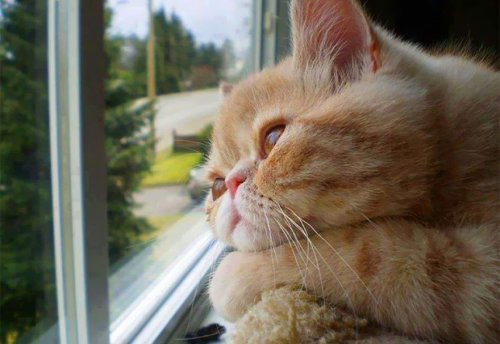 Коты и кошки у окошка (31 фото)