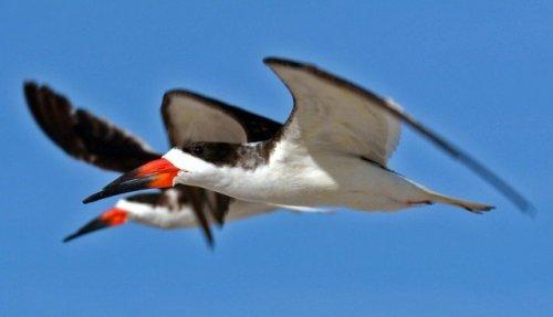 Топ-10: Птицы с самыми необычными клювами