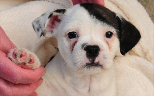 Собаки с уникальным и необычным окрасом (19 фото)