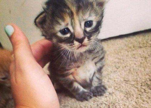 Purrmanently Sad Cat, или Мурманентно грустный котёнок (9 фото)