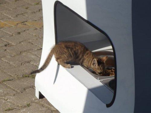Вендинговые автоматы на улицах Стамбула кормят бездомных животных (7 фото + видео)
