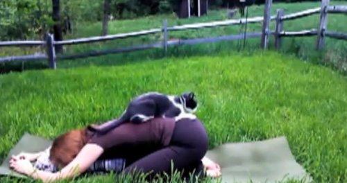 Домашние животные мешают заниматься йогой