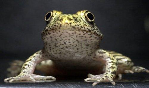 Топ-25: Самые редкие животные в мире