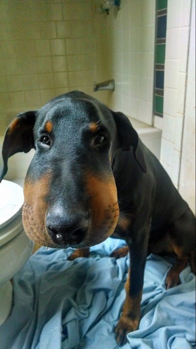 фото собак после укуса пчелы