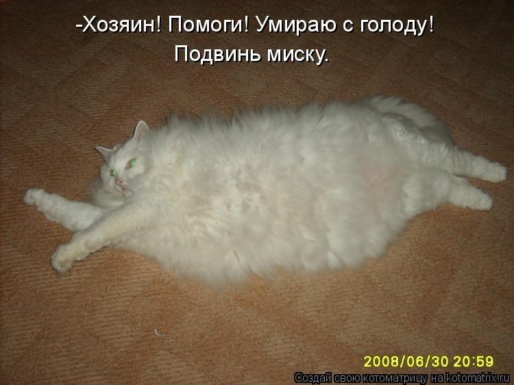 Прикольные картинки про толстых животных с надписями