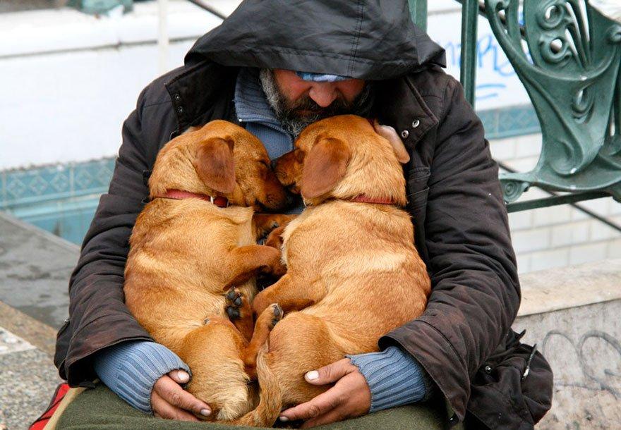 если сильная любовь к собакам почему без