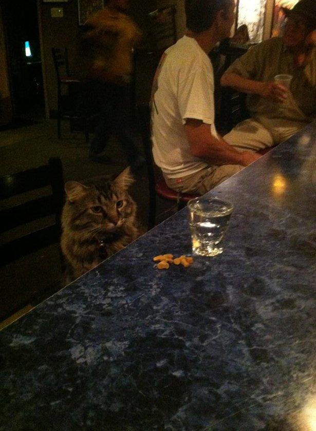 Картинки котиков лежащих на диване решение для