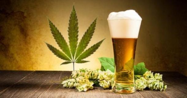 Курение конопли с пивом есть польза от марихуаны