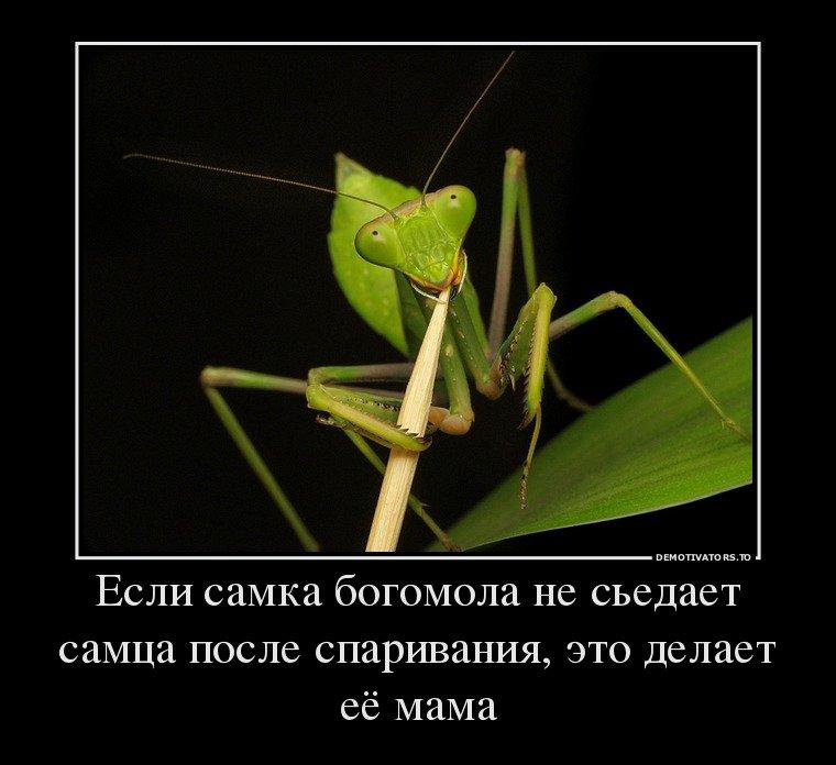 Смешные картинки про насекомых демотиваторы