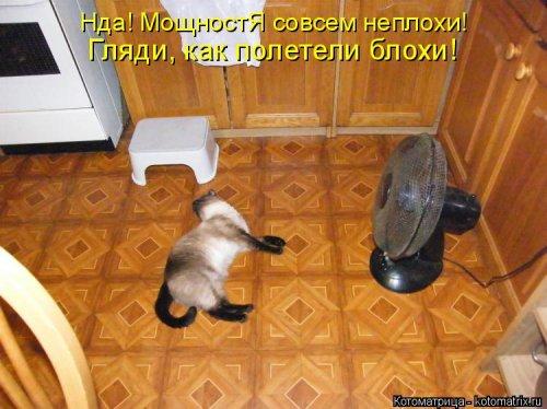 Новая котоматрица (34 фото)