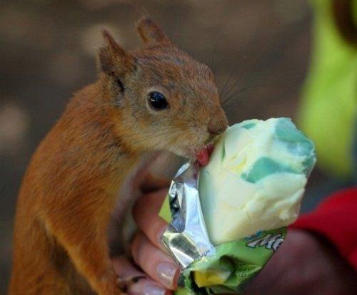 Мороженое – любимое лакомство животных (15 фото)