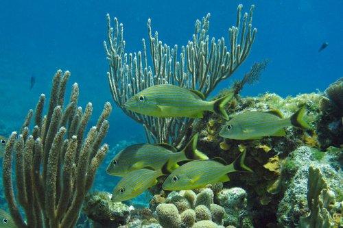 Топ-7: Самые живописные коралловые рифы на планете