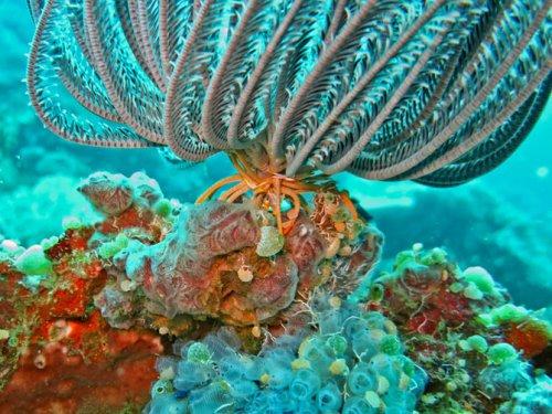 Топ-7: Самые живописные коралловые рифы на планете (25 фото)