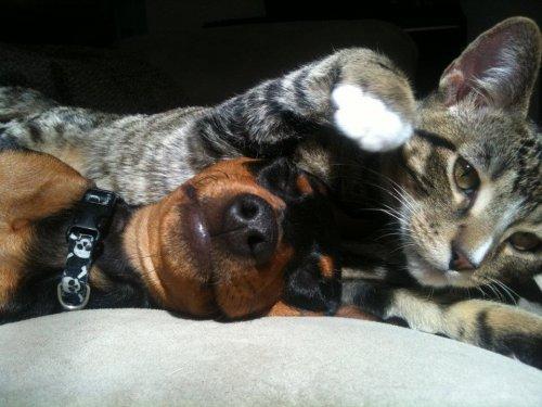 Удивительная дружба: кот Уинстон заботится о псе Зике (11 фото + видео)