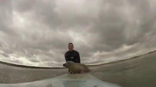 Детёныш тюленя, который мечтал стать серфингистом