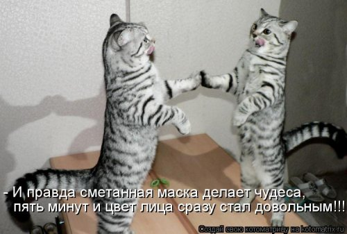 Новая котоматрица (30 фото)