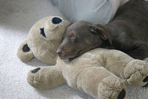 Животные, мягкие игрушки и обнимашки (21 фото)