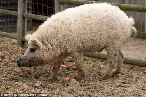 12 Гибридов животных, которые действительно существуют