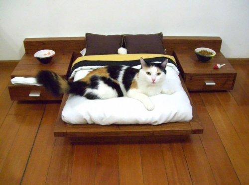 Оригинальная мебель и аксессуары для кошек (35 фото)