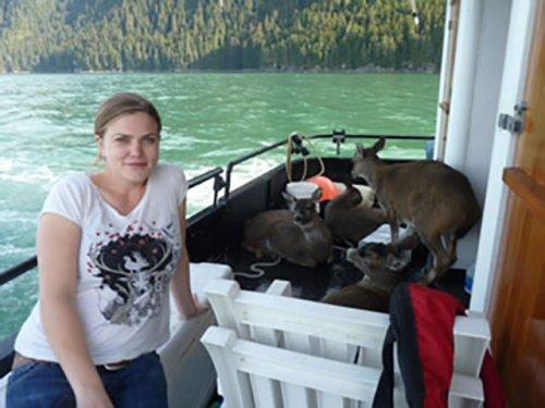 Спасение оленей, унесённых течением (18 фото)