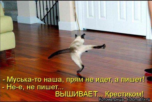 Новая котоматрица для хорошего настроения (37 шт)