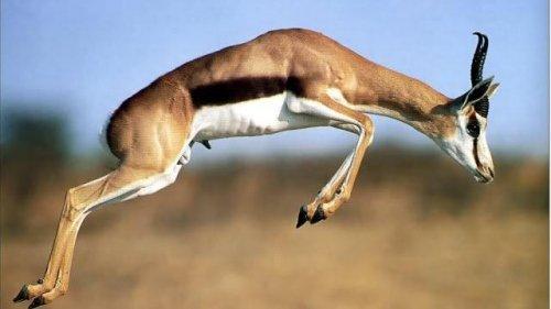 Топ-25 самых быстрых наземных животных