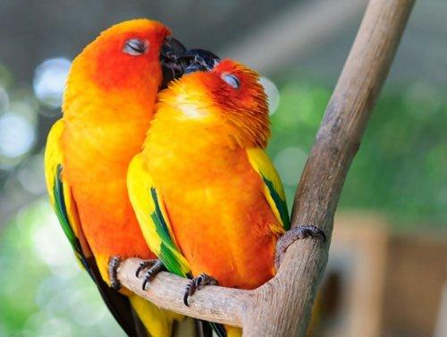 Очаровательные животные, которые не боятся проявлять свою любовь (25 фото)