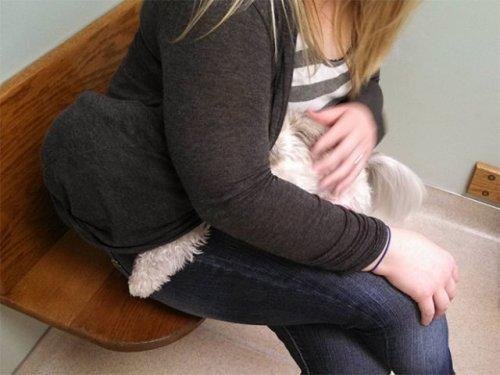 Домашние животные не любят ходить к ветеринару (23 фото)